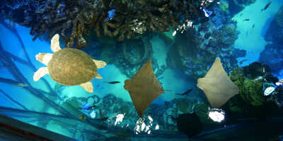 Enjoy Underwater Life With Your Tadpole at the New England Aquarium
