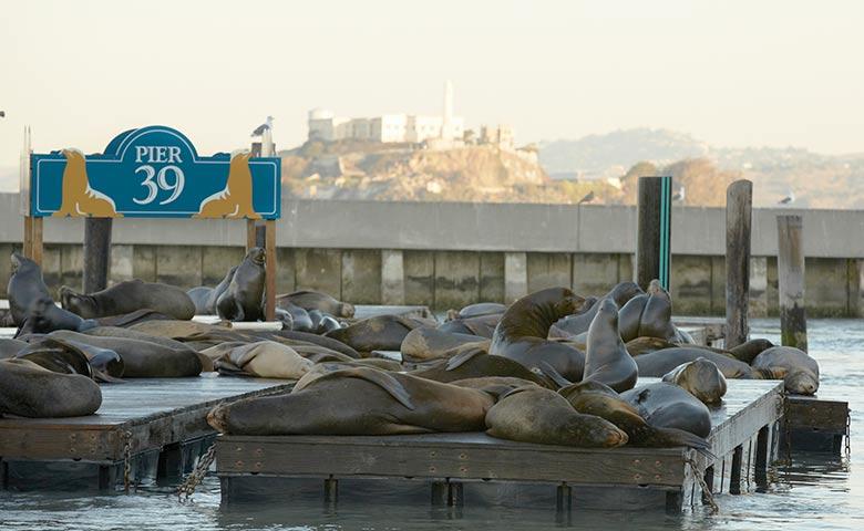 Blue & Gold Fleet Bay Cruise Adventure