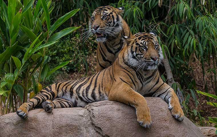San Diego Zoo® and Safari Park